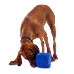 perro-con-cubo-buster