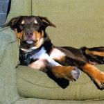 perro-durmiendo-sobre-sillon