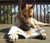 Perro leyendo Revista