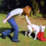 Perro Mordiendo Ropa