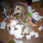 Perro rompiendo una revista