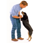 perro-saltando-sobre-persona