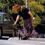 Perro sentado al borde de una calle