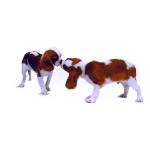 perros dandose la bienvenida