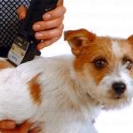 Afeitando a un Perro