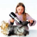 cepillando un perro