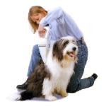 Aspirando el pelo de un perro