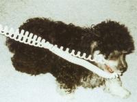 cachorro mordiendo cable
