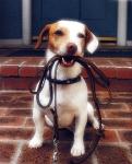 Correas y collares de perros