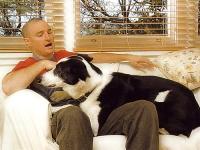 El perro en casa