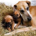 madre y dos cachorros