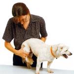 masajeando a un perro
