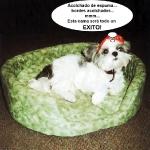 perro catador de cama