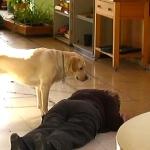 perros-para-epilepsia