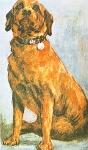 Bunty, heroe canino