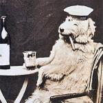 Chum tomando vino