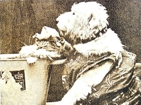 Chum, heroe canino
