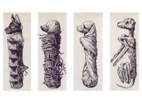 Ilustración que realizó un arqueólogo de un perro momificado del antiguo egipto