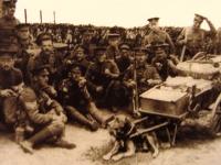 Perros militares de la primera guerra mundial