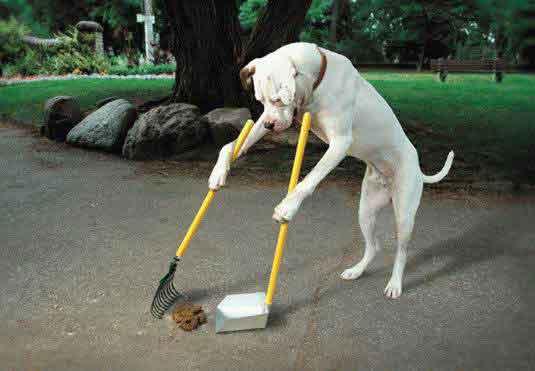 perro limpiando excrementos
