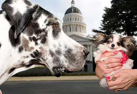 Gibson, el perro mas grande del mundo