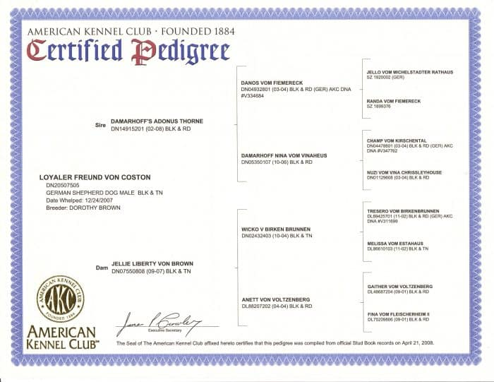certificado de pedigree del american kennel club