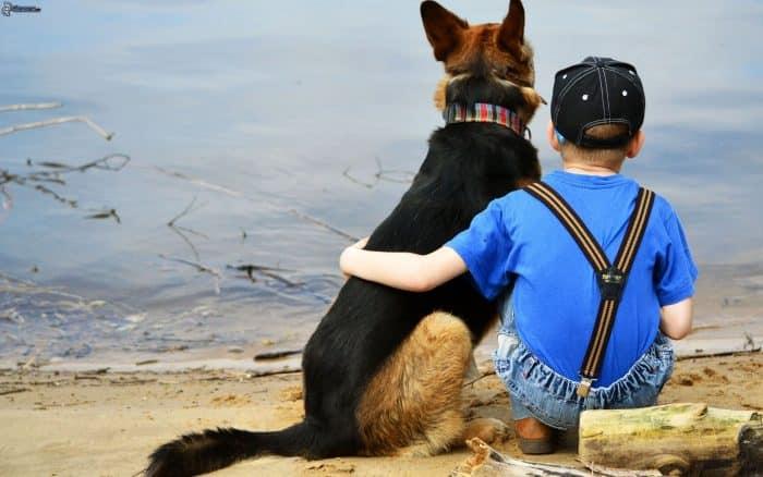 pastor aleman junto a un niño