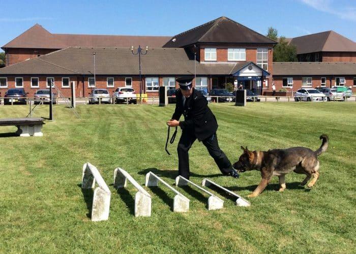 policia entrenando a su compañero pastor aleman