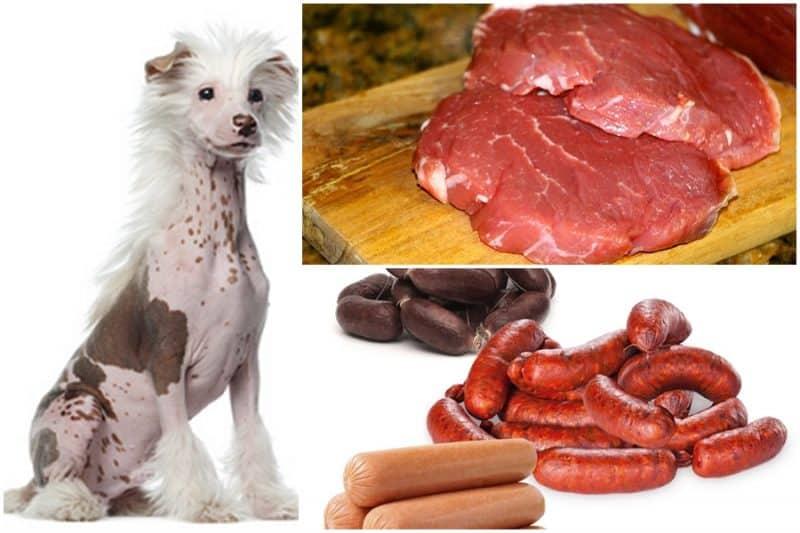 alimentos que no debe consumir el perro crestado chino