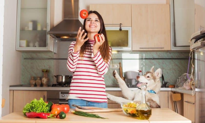 Como alimentar a un Husky Siberiano