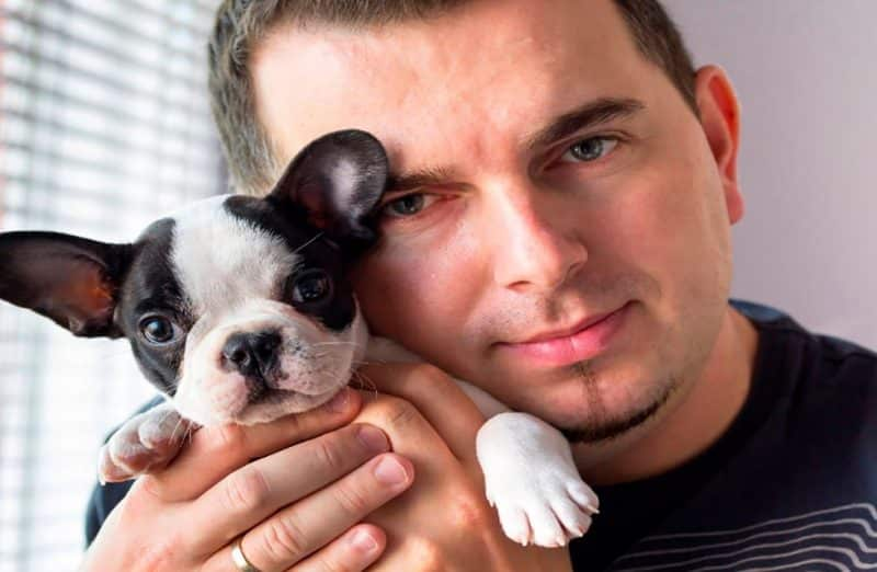 Consejos a la hora de comprar un bulldog francés