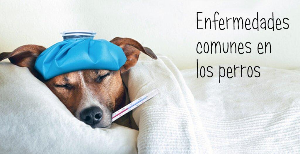 enfermedades comunes en perros