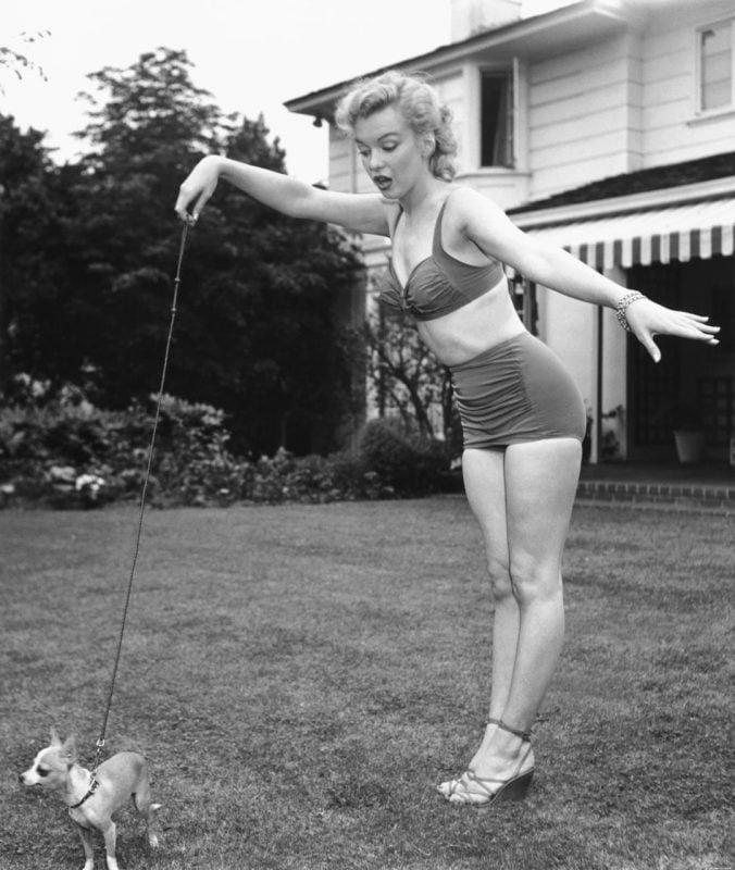 marilyn monroe jugando con un chihuahua
