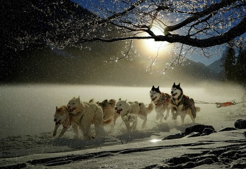 origen del Husky Siberiano