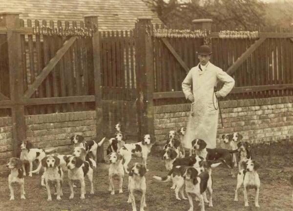 orígenes del beagle