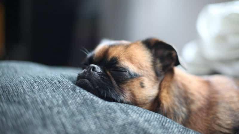 Pug durmiendo sobre una cama