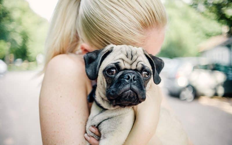 Pug en los brazos de una joven mujer