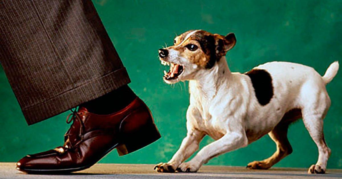 Como Enseñar A Un Perro A Ladrar A Los Intrusos Aperrados Com
