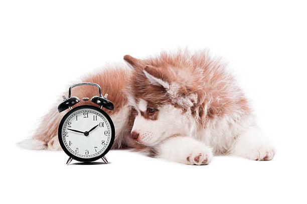 cachorro mirando un reloj