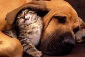 Interaccion entre perros y gatos
