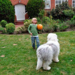 Razas de perros pequeños y medianos para niños