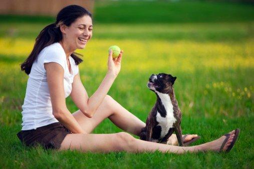 boston terrier razas de perros pequeños precios