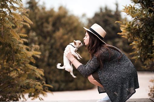 chihuahua razas de perros pequeños y cariñosos