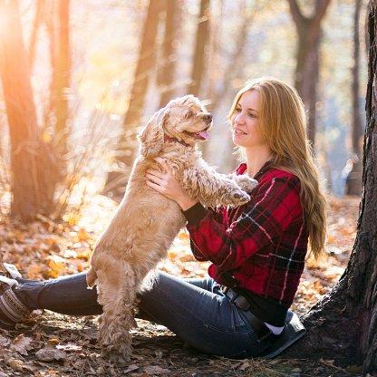 cocker spaniel americano razas de perros pequeños y cariñosos