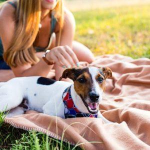 Razas de perros pequeños y cariñosos