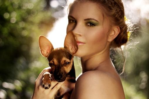pinscher razas de perros pequeños y cariñosos
