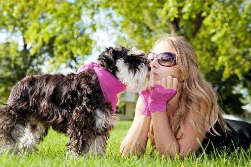 schnauzer razas de perros pequeños y cariñosos
