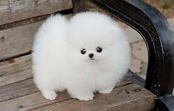 diferentes tipos de perros peludos
