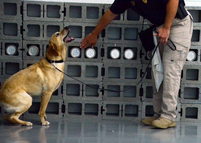 entrenando a un perro policía para que aprenda a descubrir drogas