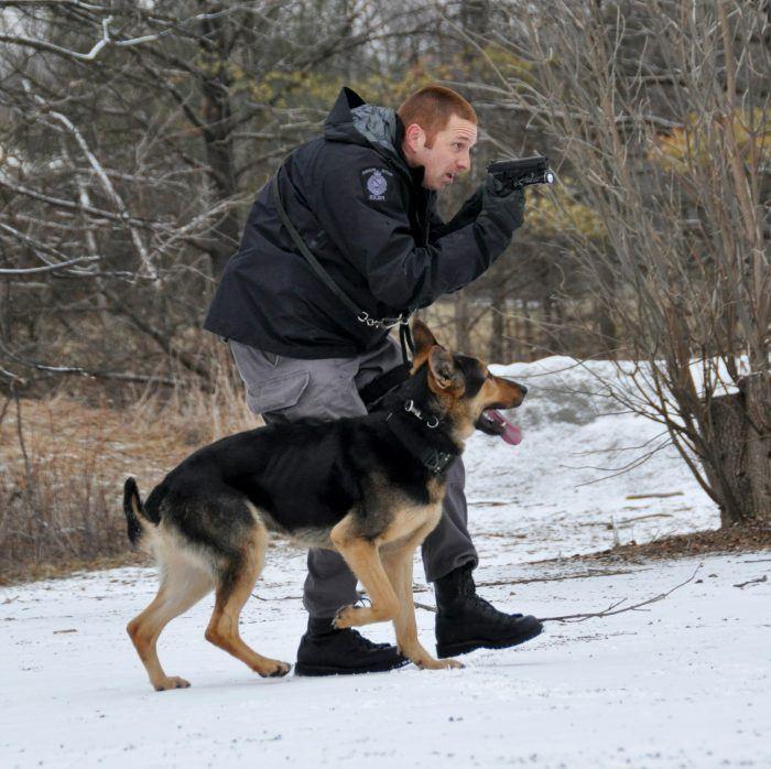 imagen de un perro policía en un operativo a campo abierto